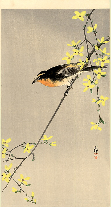 Orange Breasted Bird, Koson, ca.1910